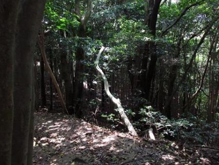 小岱山と清水山 058