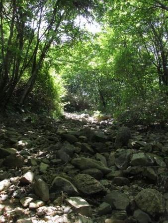 天山ミヤマキリシマ 026