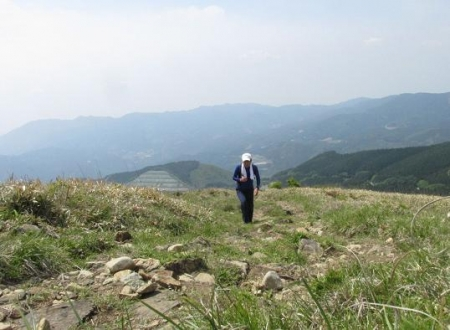 天山ミヤマキリシマ 107