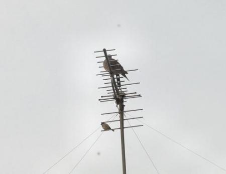 雀と鳩 001