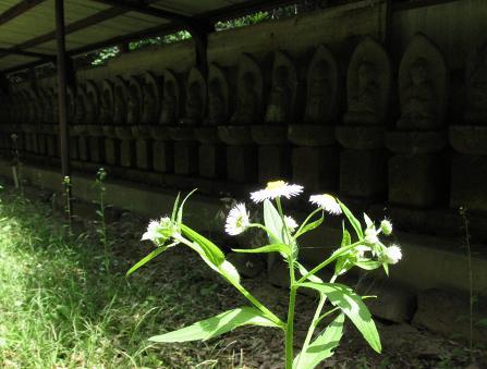 カタルパの花 035