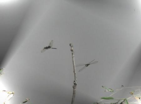 新カメラ 花 072