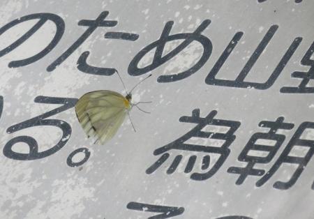 馬鈴八幡岳 064