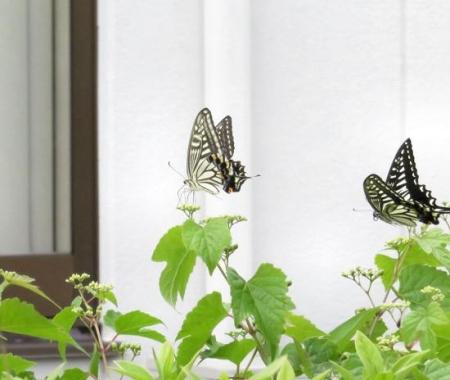 ムツゴロと蝶の舞 027