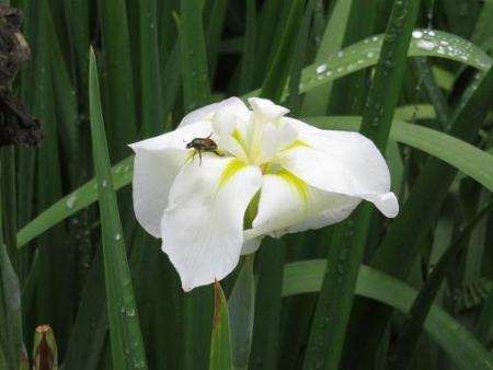 蜻蛉黒赤 056