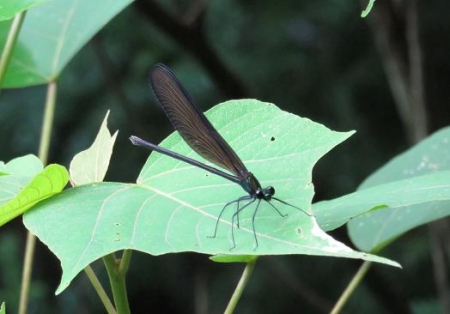 蜻蛉黒赤 015