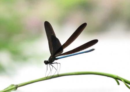 蜻蛉黒赤 033
