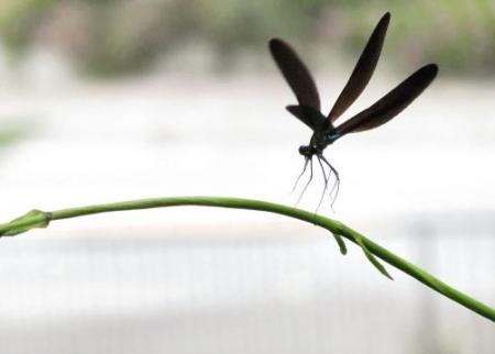 蜻蛉黒赤 035