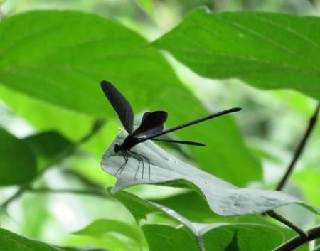 蜻蛉黒赤 032