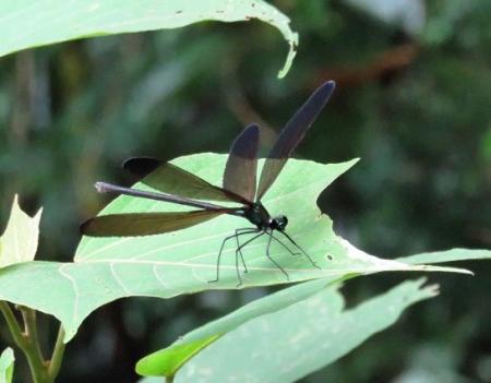 蜻蛉黒赤 018