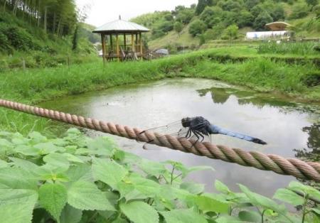 蜻蛉黒赤 121