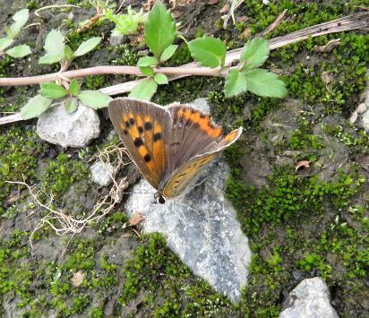 公園の蝶 050