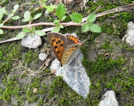 公園の蝶 048