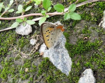 公園の蝶 047
