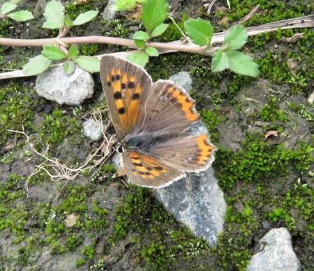 公園の蝶 069