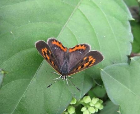 公園の蝶 036