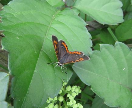 公園の蝶 032