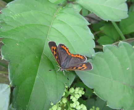 公園の蝶 035
