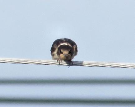 燕と黒木グリーンピア 017