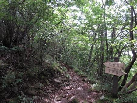 多良岳 206