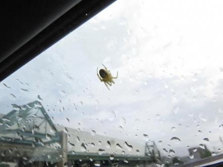 車の蜘蛛 002