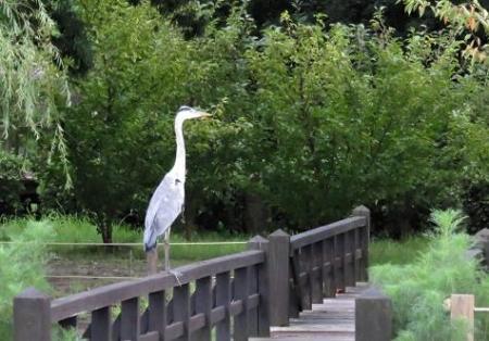 電車と公園の鳥 078
