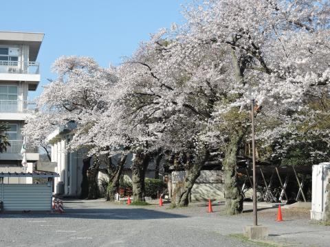 桜が丘高校