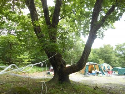 N_キャンプテント