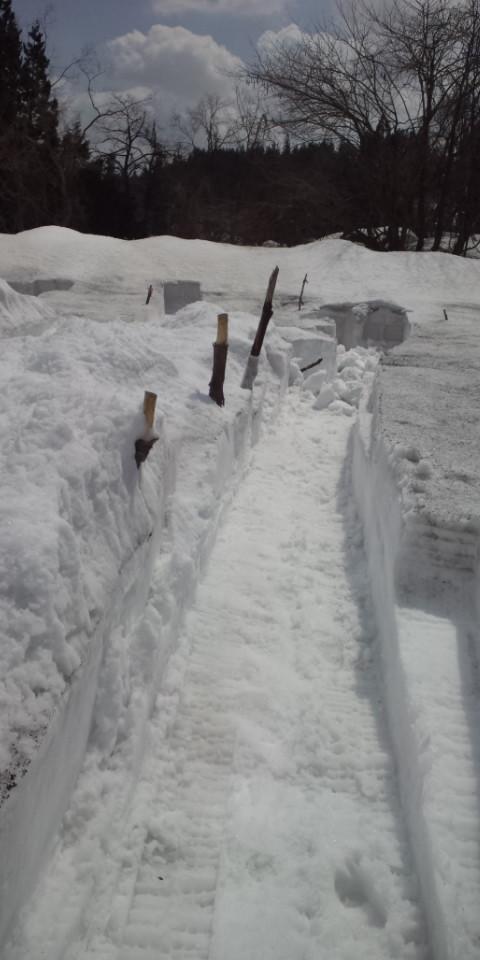 なんとか雪道ついた