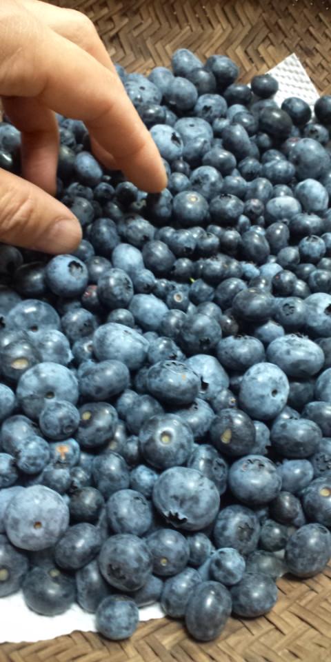 収穫いろいろ2014.7.18