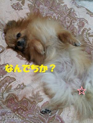 s-DSC_00621.jpg