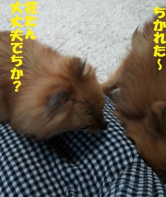 s-DSC_0062_201403182027397e0.jpg