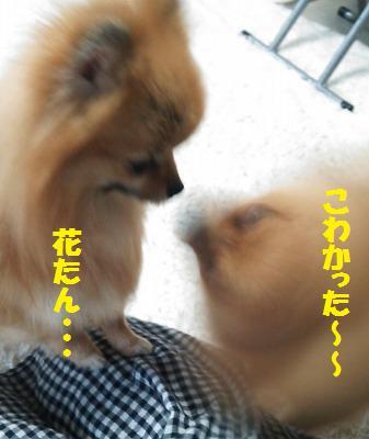 s-DSC_0063_20140318202741601.jpg