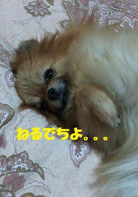 s-DSC_0064_201404201136568d6.jpg