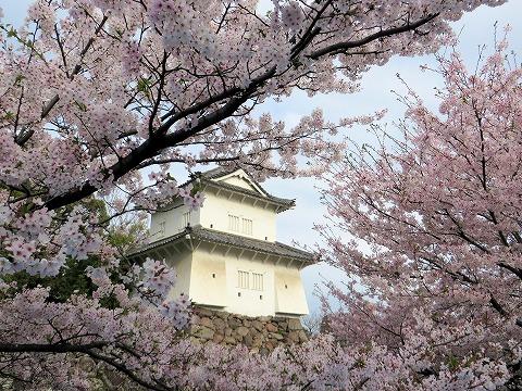 府内城址の桜