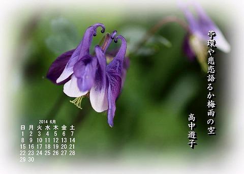 オダマキの花