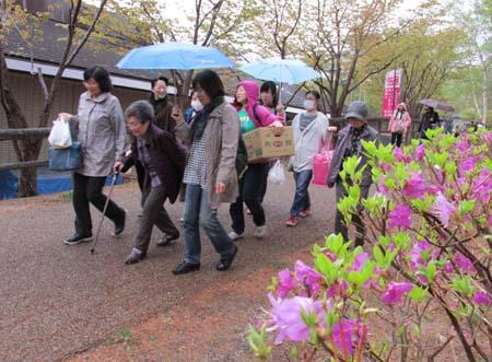 散策路帰り山桜と共に