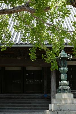 New Image 新緑の寺