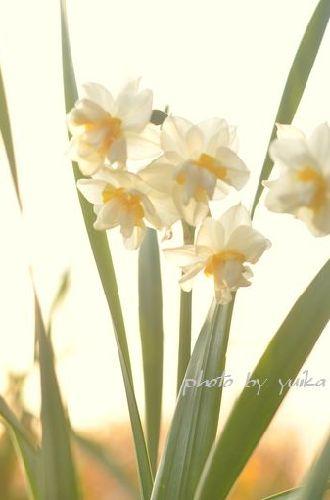 春312-1