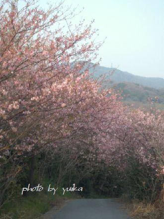桜317-2