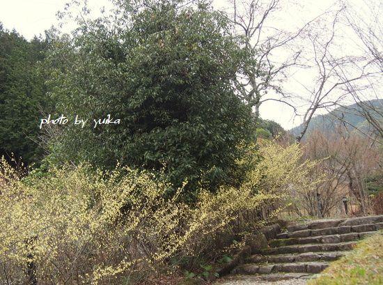 松平郷329-2