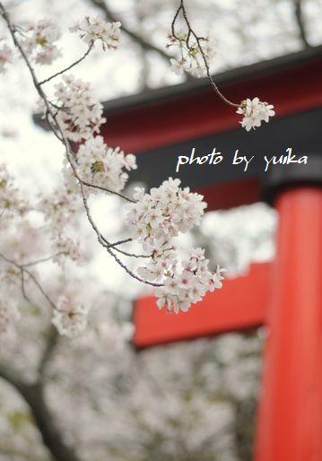 桜403-1