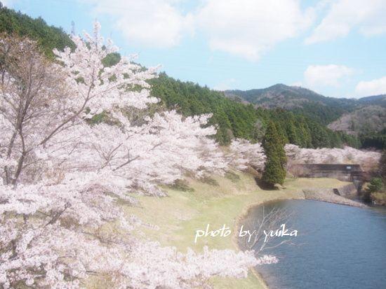 桜407-C