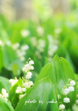 庭の花504-2