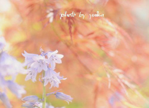庭の花504-1