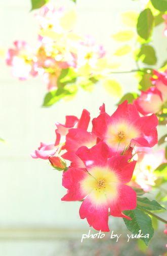ガーデン519-1
