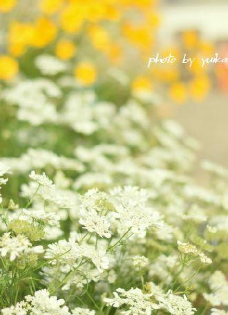 庭の花。 524-2