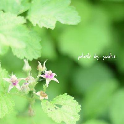 野の花525-3