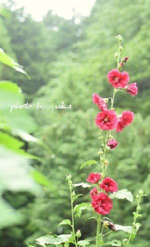 赤い花623-1