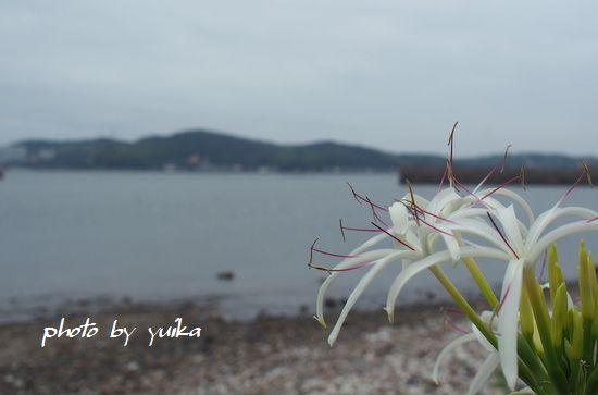 ハマユウ706-2